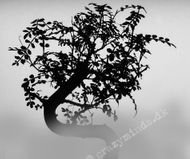 Bonsai tree in the morning mist